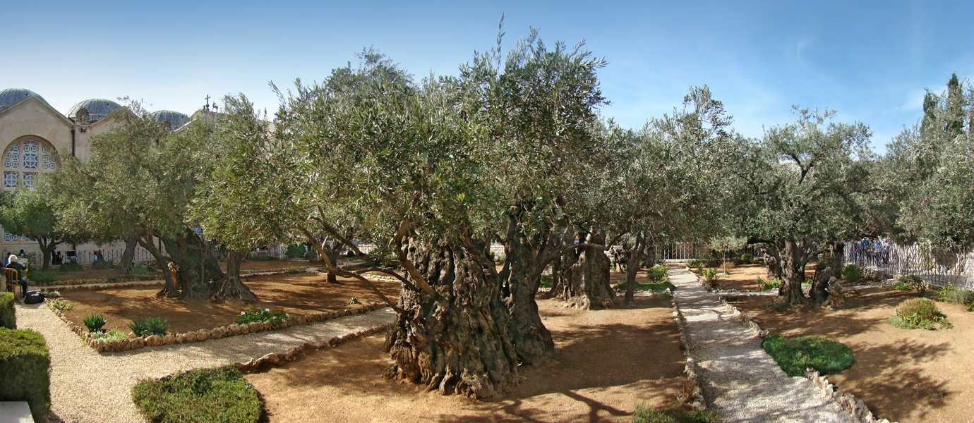 Gardem of Gethsemane